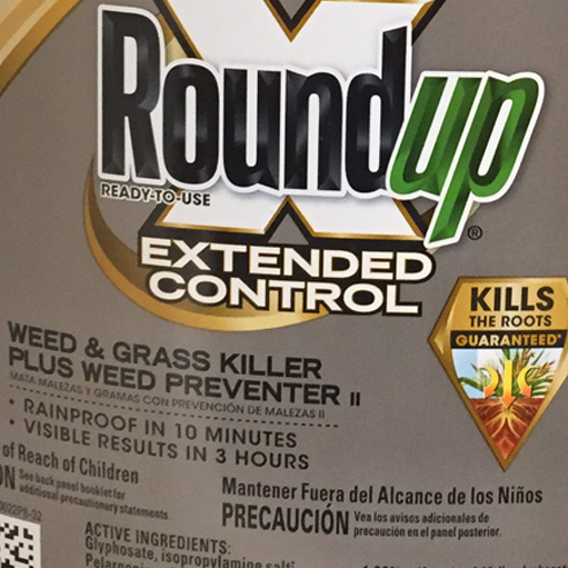 Roundup weed and grass killer, and all varieties poison ivy, weed not grass, contain the effective ingredient glyphsate exposure to which can cause cancer and other health problems
